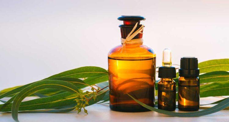 Óleo de Eucalipto: o mais versátil entre os remédios